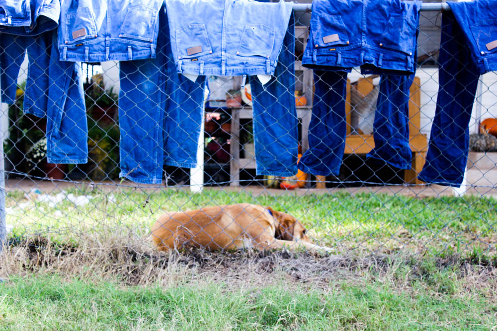 Jeans on a fence with a dog || pumpkin patch || www.alfasengupta.com