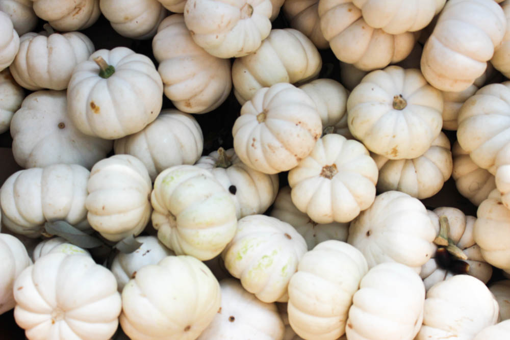 white pumpkins || www.alfasengupta.com