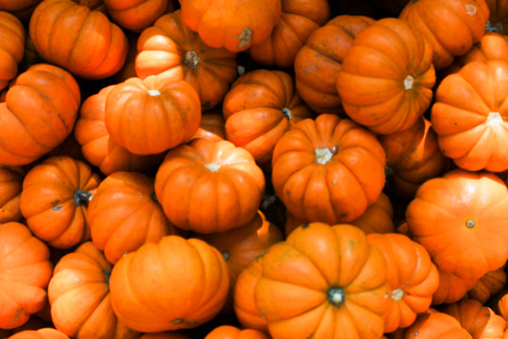 Orange pumpkins || www.alfasengupta.com