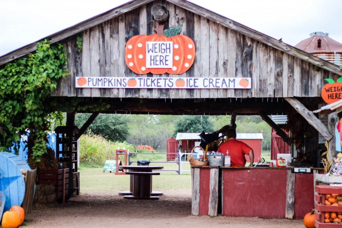 sweet berry farm, pumpkin patch, photography