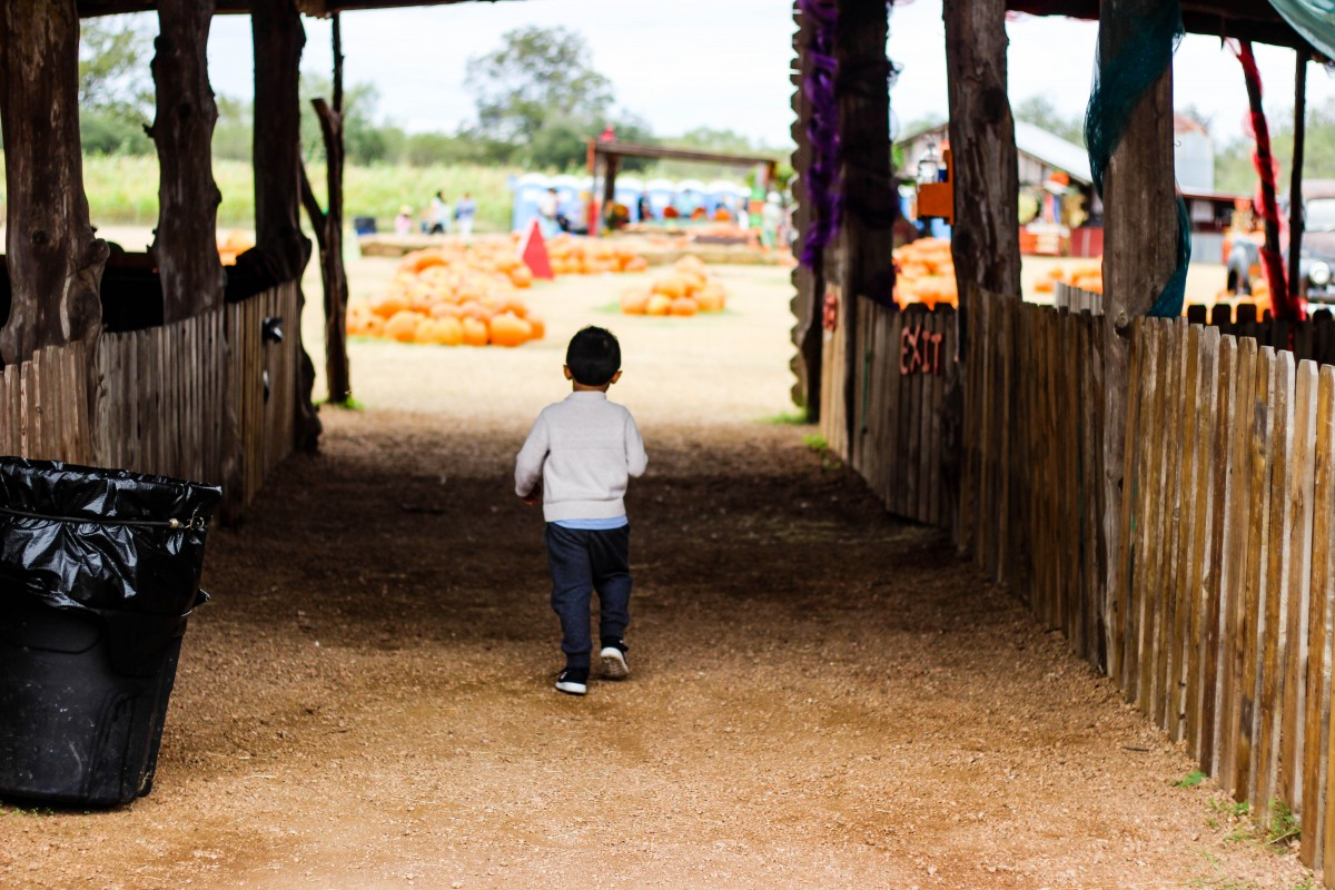 sweet berry farm, pumpkin patch, photography